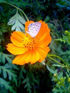 気分は『昆虫写真家』