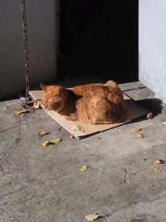 陽向猫の定位置