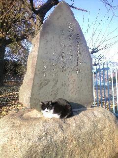 「とおりゃんせ」の猫