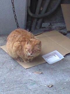 久々の日向猫
