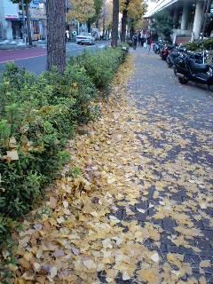 落ち葉のある道