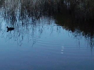 水辺の鳥と月