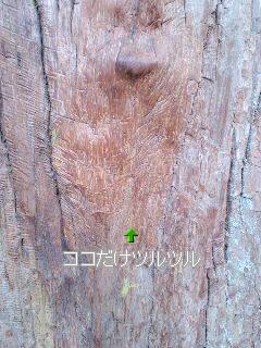 三峯神社の御神木