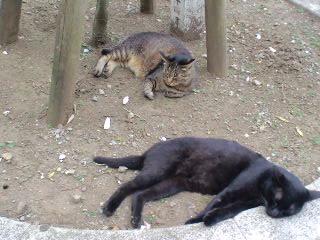 猫だって暑そうな猛暑日