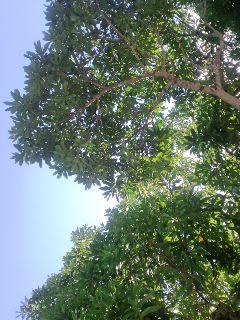 木陰から見上げる緑色