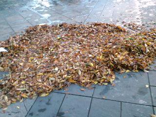 集められた落ち葉