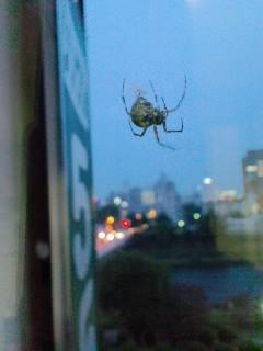 地上8階の窓に、蜘蛛