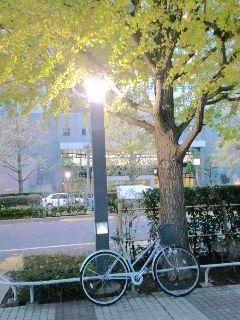 目の前を、信号無視の自転車が通って行った