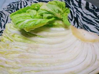 白菜、育ってる!!