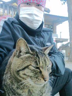 神社の猫に、癒やしてもらいました